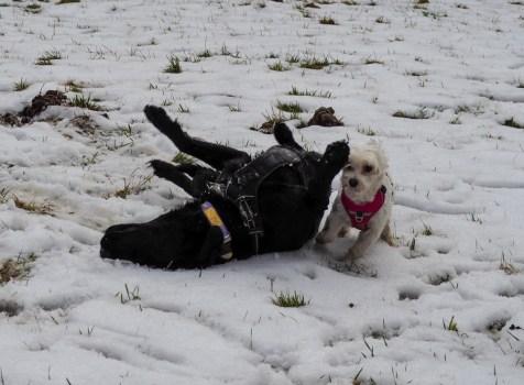 Psiarze kontra właściciele psów małych. Czyli wylanie frustracji przewodnika mikropsa.