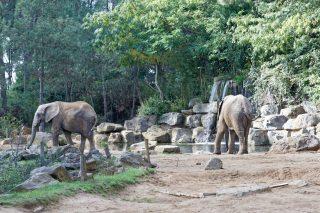 Zoo de la flèche objectif pays de loire56598_DxO