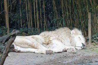 Zoo de la flèche objectif pays de loire56602_DxO
