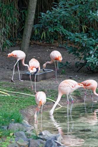 Zoo de la flèche objectif pays de loire56620_DxO