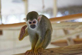 Zoo de la flèche objectif pays de loire56633_DxO