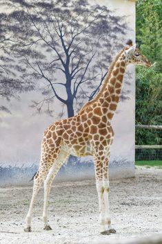 Zoo de la flèche objectif pays de loire56663_DxO