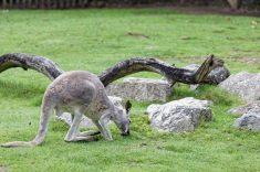 Zoo de la flèche objectif pays de loire56686_DxO