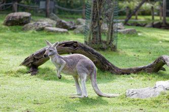 Zoo de la flèche objectif pays de loire56691_DxO