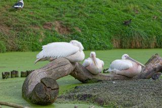 Zoo de la flèche objectif pays de loire56820_DxO