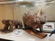 museum des sciences naturelles Angers_151817