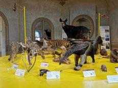 museum des sciences naturelles Angers_152142