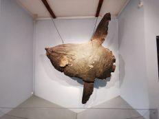 museum des sciences naturelles Angers_152856