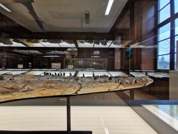 museum des sciences naturelles Angers_155332
