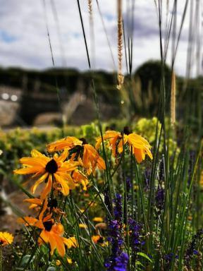 chateau et jardins de villandry_New Name_783a0edf-2b26-4f56-93ec-e27d1bfb6017