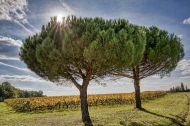 brissac quincé la foret et les vignes_JFP58771