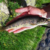 Pêcher la truite au toc, matériel, montage et action de pêche