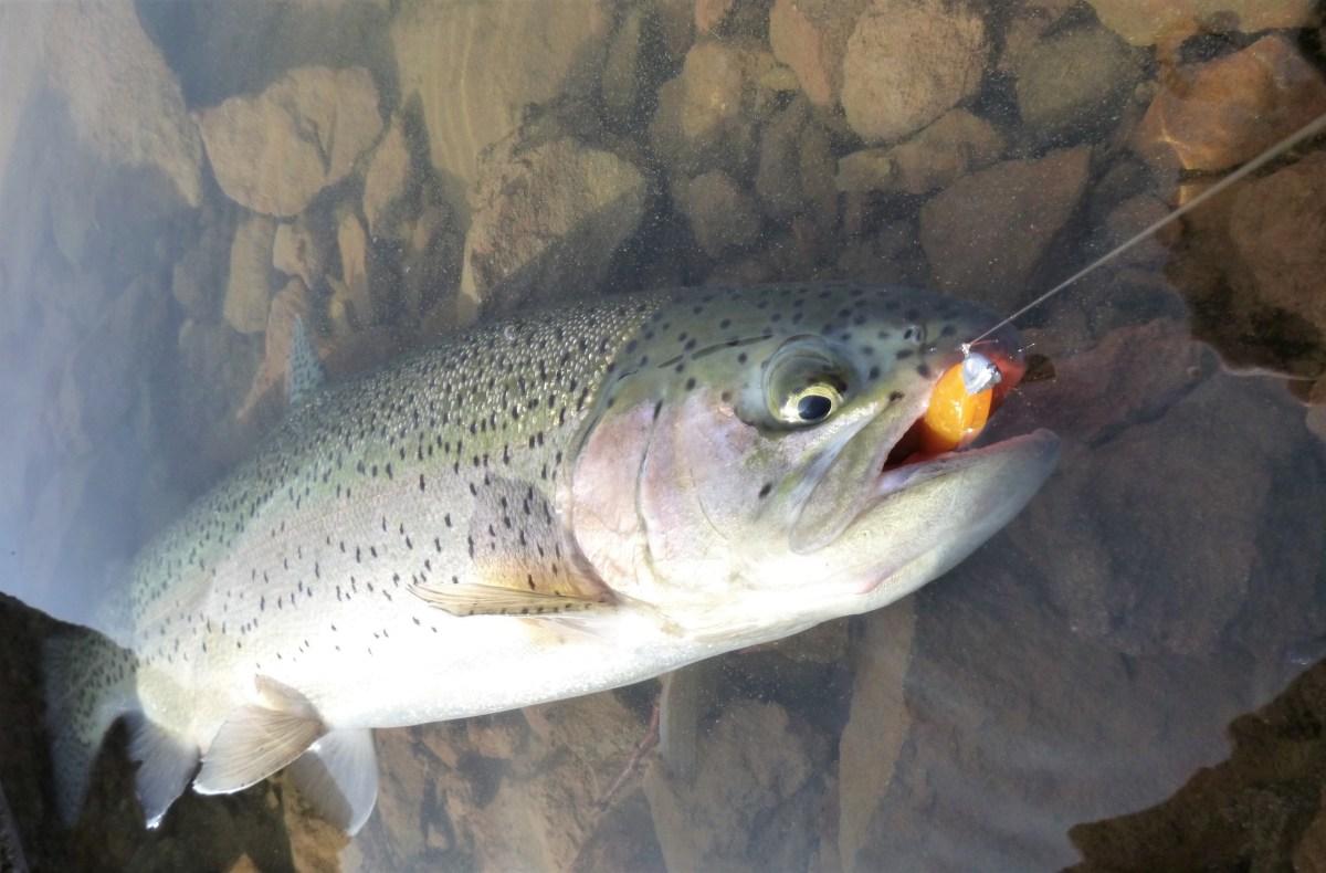 Pêche de la truite en réservoir, un bon moyen pour progresser