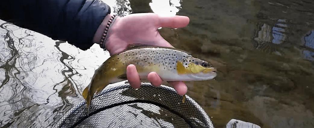 poisson éduqué