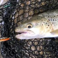 La pêche à la cuillère, conseils, matériel et action de pêche