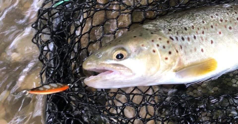 pêche no-kill