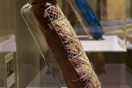 Что находится внутри древнеегипетской мумии кошки?
