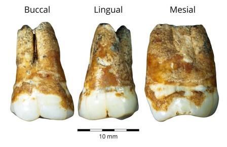 Люди пришли из Европы в Левант около 40 000 лет назад