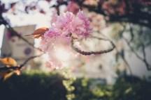 Magnolie aus LIcht