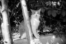Erschreckte Katze