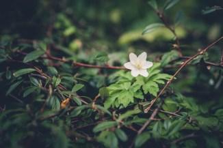 Unbekannte Blüte in Gestrüpp