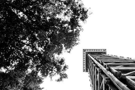 Goetheturm von unten mit Baum