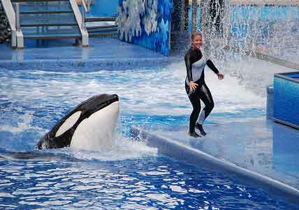 Baleia assassina puxa mulher para água, sacode-a violentamente e mata