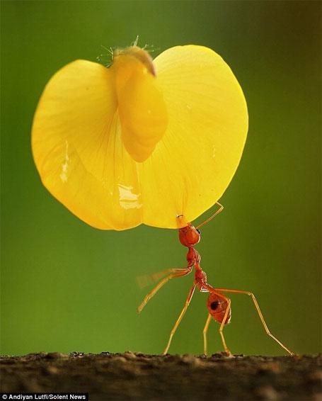 Fotografia incrível - formiga trabalhando