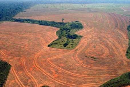Amazônia perdeu 15% da floresta até 2002