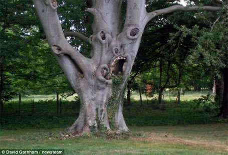 A árvore bizarra que mete medo em crianças
