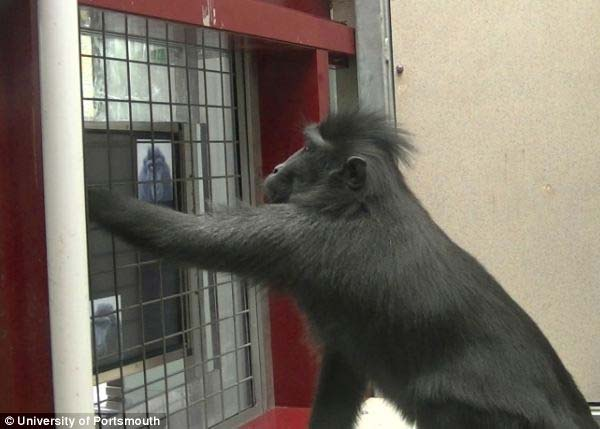 Foto macaco e tablet