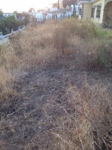 Terreno para desbrozar. Trabajos de jardinería en Málaga