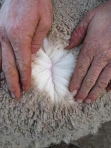 150692 Wool