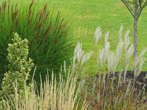 Yes more ornamental grass love the obsessive neurotic for Ornamental feather grass