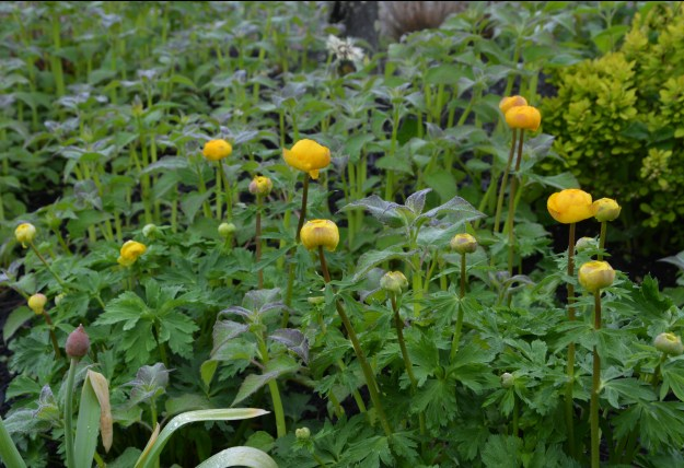 orange flower bee balm