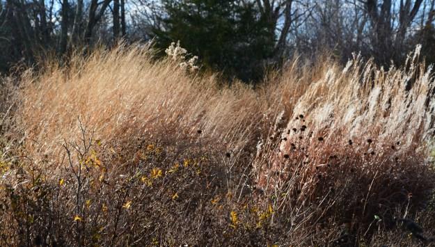 grasses-fall-2