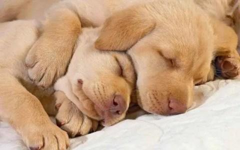 Cachorros filhotes dormindo
