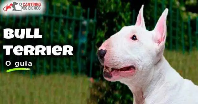 Cachorro Bull Terrier em Destaque