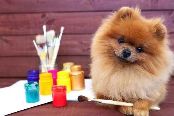 Nomes criativos para cães