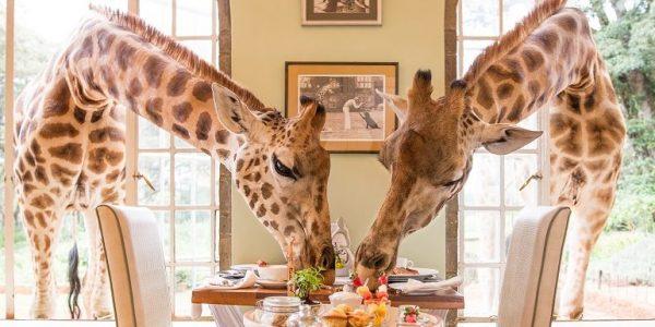 cropped-Giraffe-Manor-Breakfast2.jpg