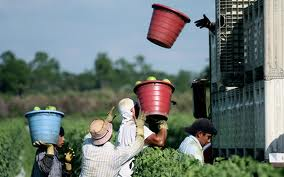 In Florida, illegal aliens pick tomatoes in labor conditions worse than slavery