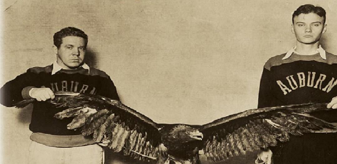 war-eagle-banner-od-1