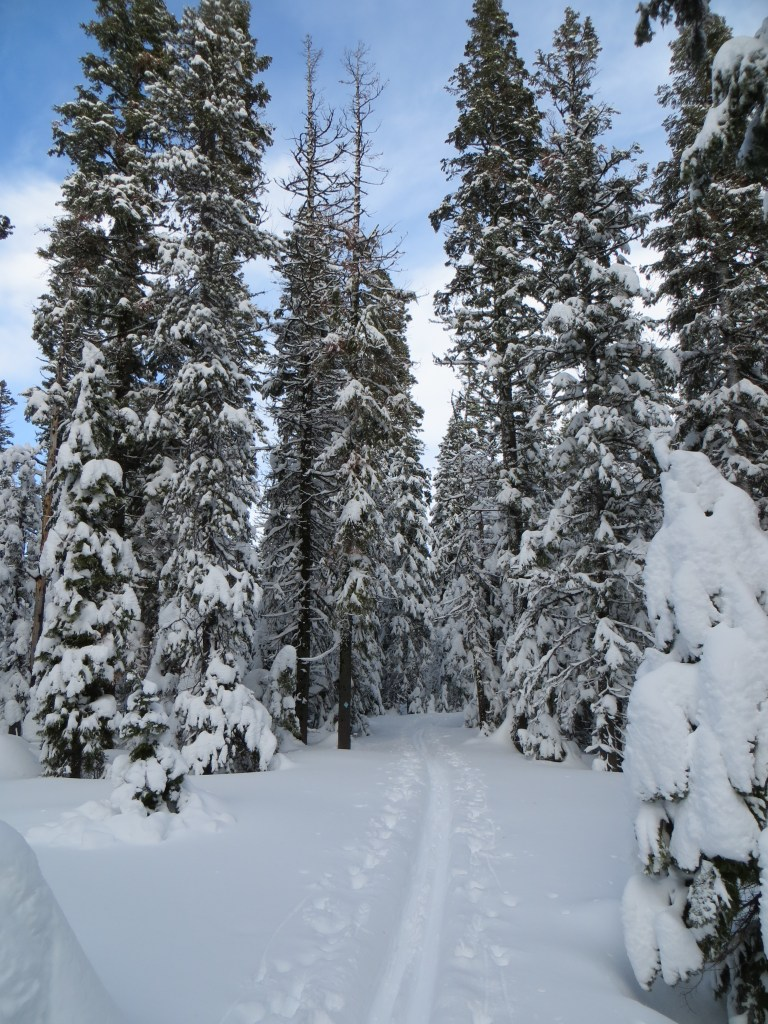 Trail Through the Powder