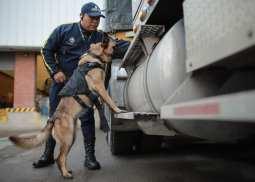 Caninos adiestrados para empresas | Seguridad de Occidente