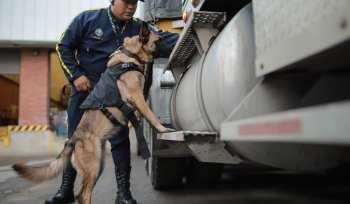 Caninos adiestrados para empresas   Seguridad de Occidente