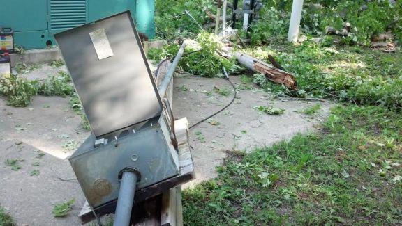 tree sewage spill