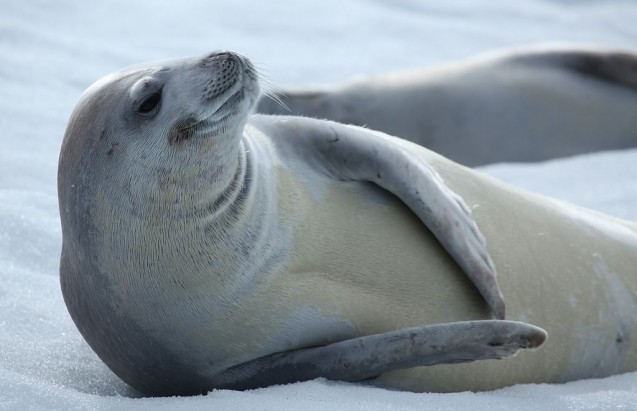 A Monumental Year for Marine Conservation