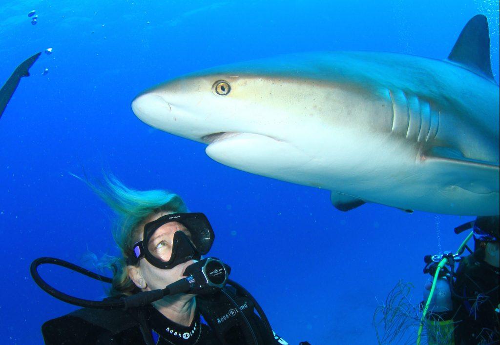 Youth Shark Expedition- Bahamas!