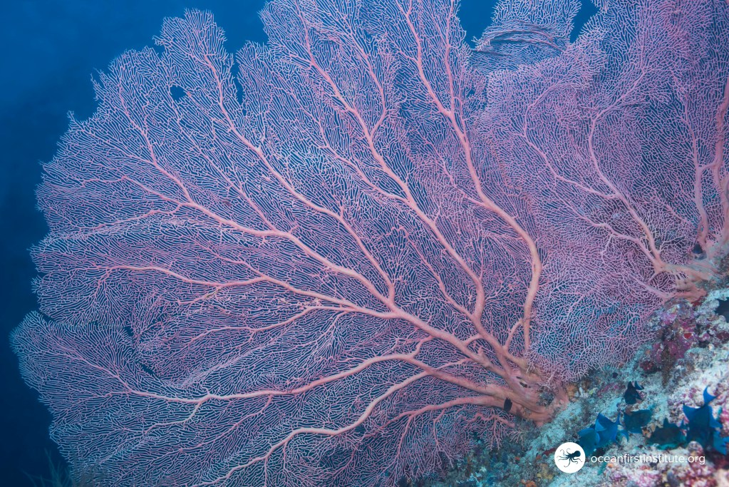 Creature Feature: Coral