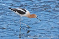 american avocet 15675 - HEALTH AND FITNESS